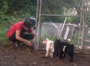 David Brown tends his baby goats.