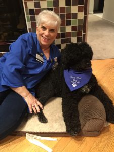 Clinical social worker Ingrid Grossman brings her certified therapy dog, Midge, to Henry Ford West Bloomfield Hospital to visit patients.
