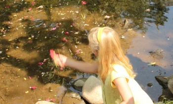 A young member of Ann Arbor's Jewish Cultural Society casts her flowers into the Huron River at Island Park during tashlich.